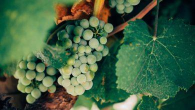 Cosa sono i vini Biologici e Biodinamici?