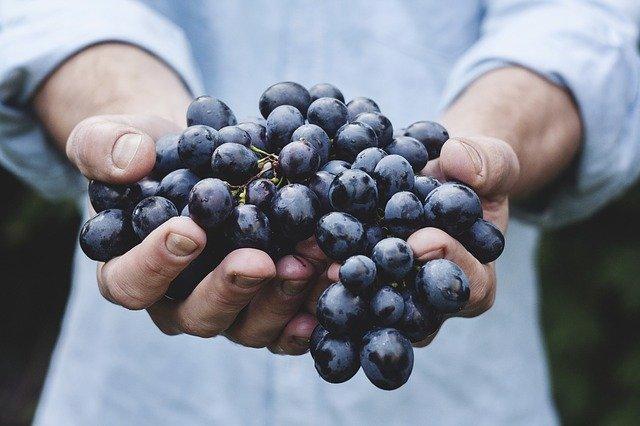Vino Biologico, vino più sano